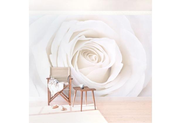 Bilderwelten Vliestapete Pretty White Rose Fototapete Breit